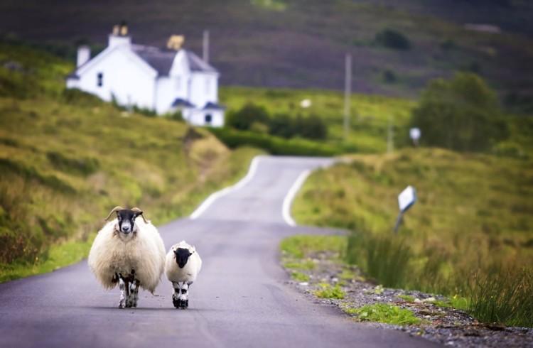 Scozia in libertà