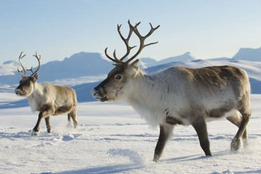 Tromso, Aurore e Avventure